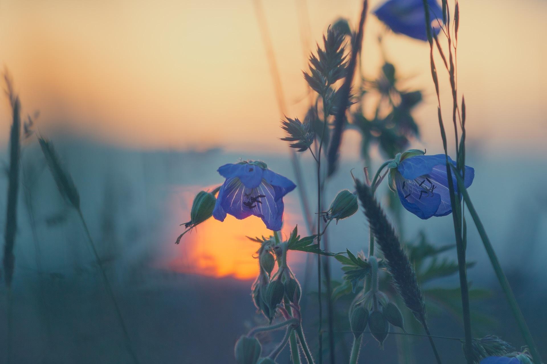 meadow-811339_1920